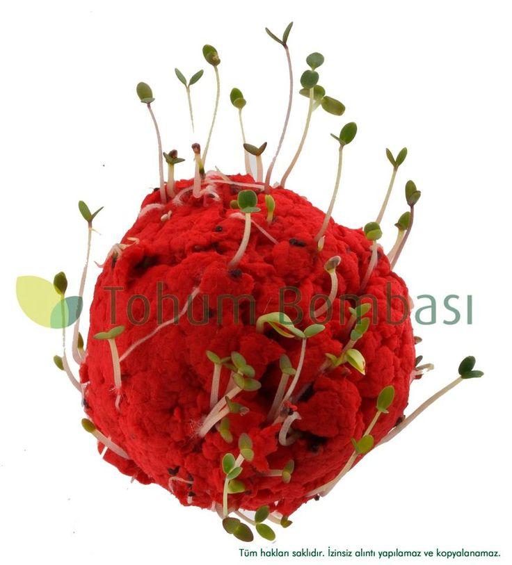 tohum bombası tohumlu doğa kağıt 5