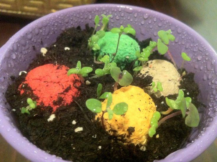 tohum bombası tohumlu doğa kağıt saksılı 4
